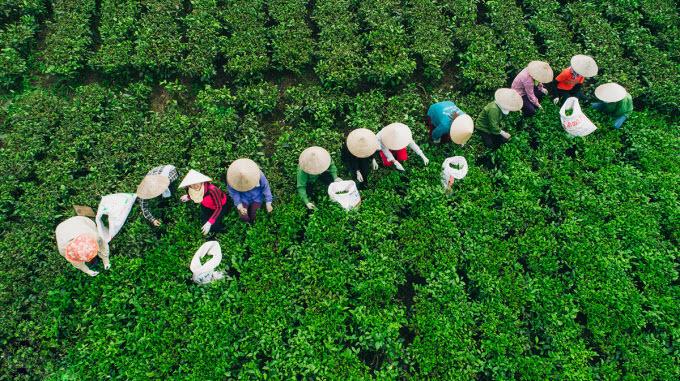 SENT TO HARI- Explore the tea kingdom and tourist hotspots in northern province