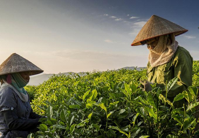 SENT TO HARI- Explore the tea kingdom and tourist hotspots in northern province - 1