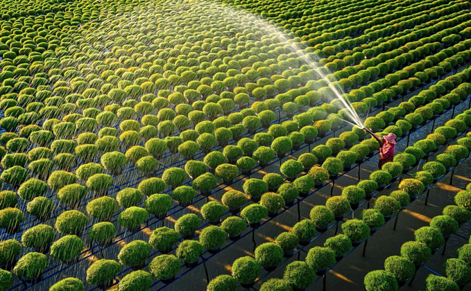 A farmer waters flowering plants at Sa Dec of Dong Thap Province, southern Vietnam. Photo by Nguyen Tan Tuan.