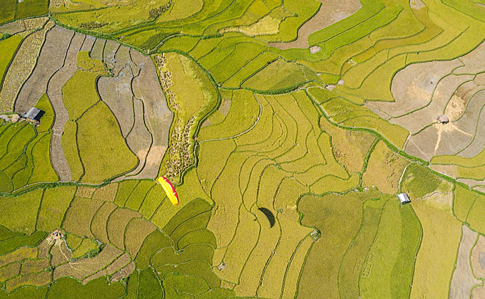 Paragliding overgolden rice field in Tu Le. In mid-September and early October, it is an ideal time to see terraced fields in Yen Bai during the ripe rice season. This is also the time when photography lovers all over the country come to compose photos. Photographer Nguyen Tan Tuan (Ho Chi Minh City) has a photo hunt with his colleagues on a journey from Tu Le (Van Chan district) to Lam Mong and Lam Thai villages - Cao Pha valley - Khau Pha pass and Che road Cu Nha - La Pan Tan - Lao Chai - Sang Nhù (Mu Cang Chai district).