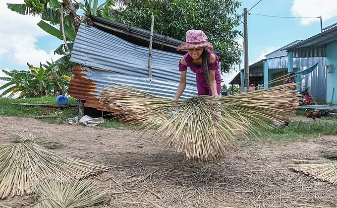Sa Rel, a Phu My resident brought the grass to the yard to dry at midday. If the days are sunny, people only need to dry them for three days. The dried bundles are delivered to a factory nearby to compress. Before machinery was available, people used a large pestle to smash the grass.