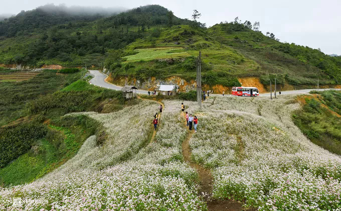 Tourists usually take a break to capture this gorgeous view of buckwheat flowers growing all the way from Dong Van District to Lung Cu Commune. You can also go into buckwheat flower farms nearby for a fee of VND10,000 ($0.43) per person.