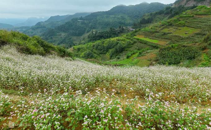 Ha Giangs rocky highlands bask in autumnal splendor