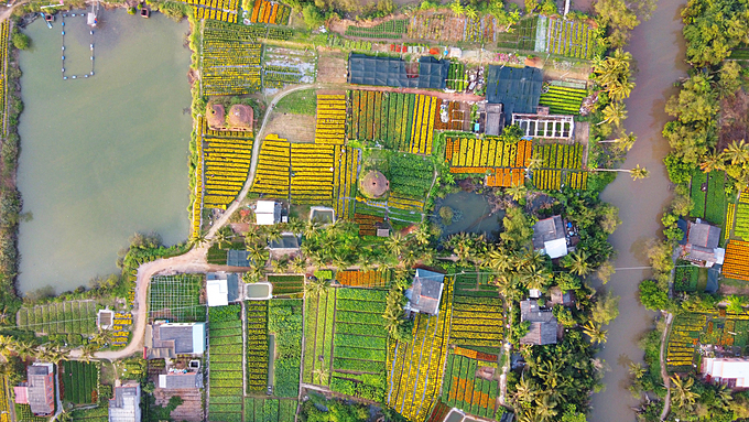 For years now, the 3-hectare land near the old brickyard has been hired by locals in Cho Lach District in the Mekong Delta province of Ben Tre to grow flowers to serve Tet demand. Cho Lach flower village is the largest second in the Mekond Delta after Sa Dec flower village in Dong Thap Province with 600 hectares of flower plants.