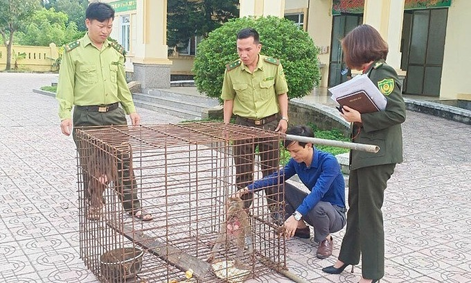 Endangered macaques released from captivity