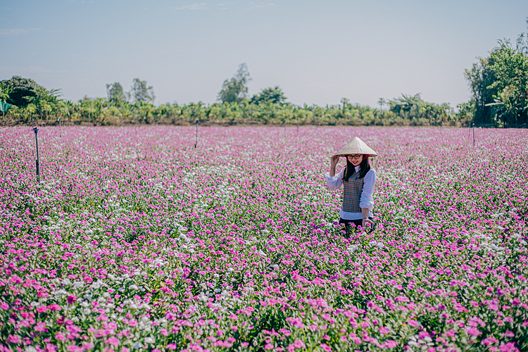VZN News: [Caption]A girl takes photo on the field. Visitors are advised not to trample or pick up flowers as these blossoms are used for disease treatment, extremely important to local people.