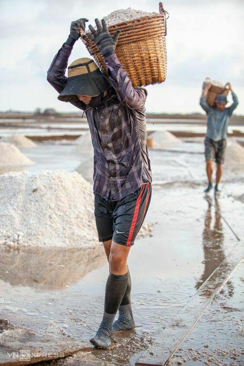 Salt field workers use wheelbarrows to transport salt to the assembly point.