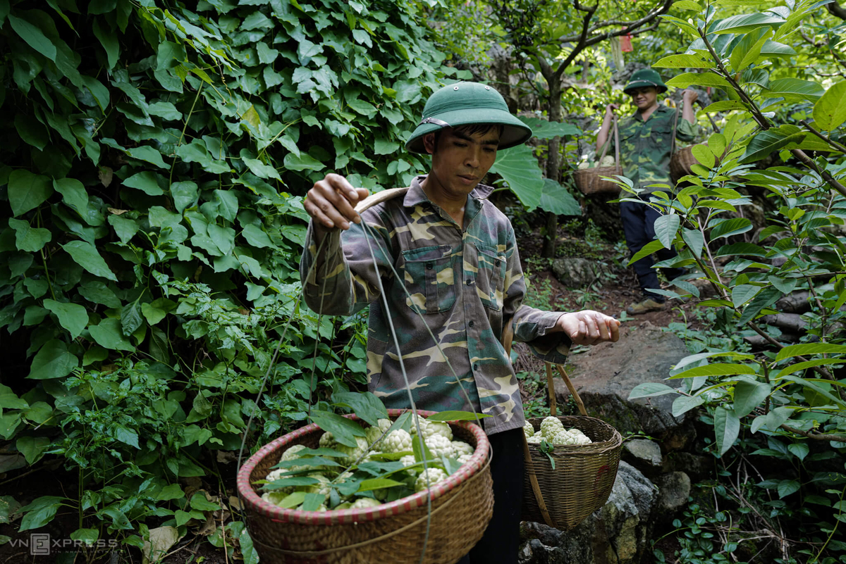 Rocky highlands expedition yields tons of custard apples