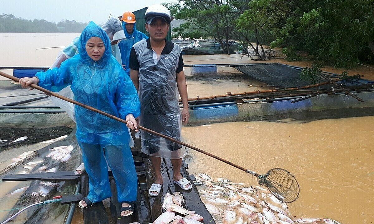 Trung (in white helmet) and his friends catch dead fish in his farm to sell at lower prices. Photo by Dai Son.