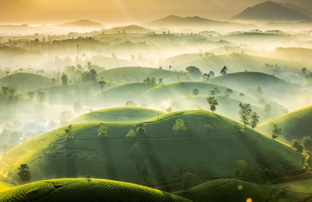 Tea Hills by Vu Trung Huan. Photo courtesy of RMetS.
