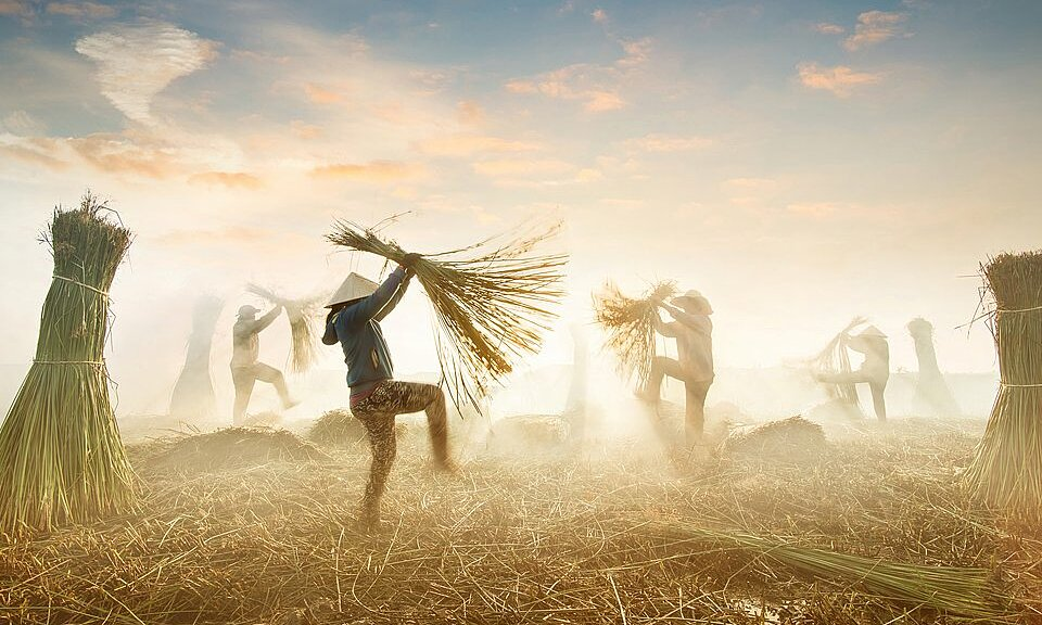 Photographer Hoa Carol captured the moment of Vietnamese farmers harvesting sedge, which is later used to weave mats.