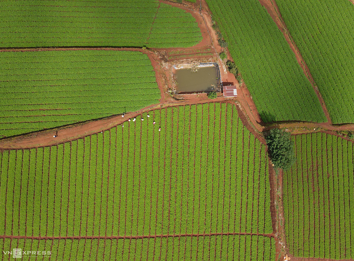 A small house by green vegetable beds in the suburbs of Da Lat.
