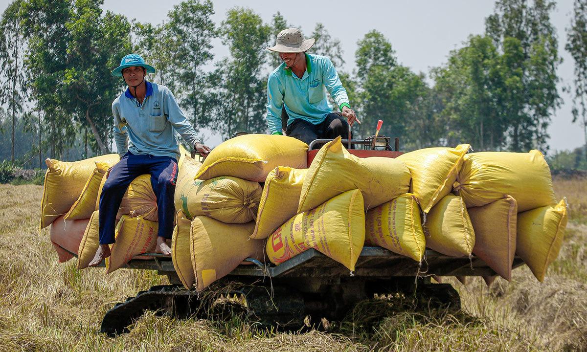 Rice exports rise despite stockpiling amid pandemic