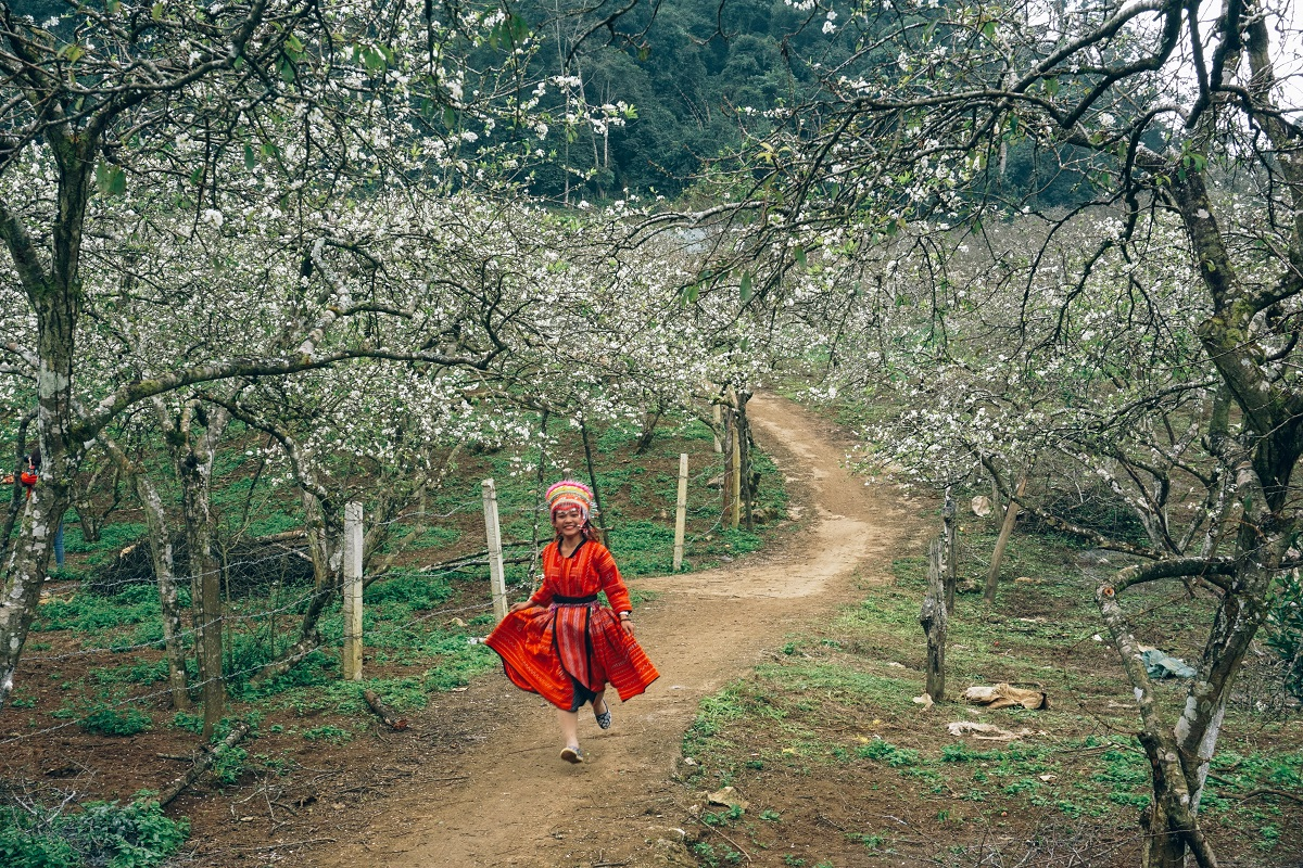 The author, Xu Kien, amid plum blossoms.