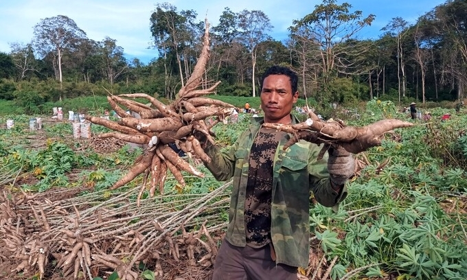 Cassava exports, prices jump on surging China demand