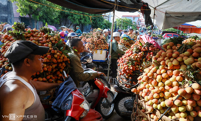 Foreign merchants register to purchase lychees in Vietnam