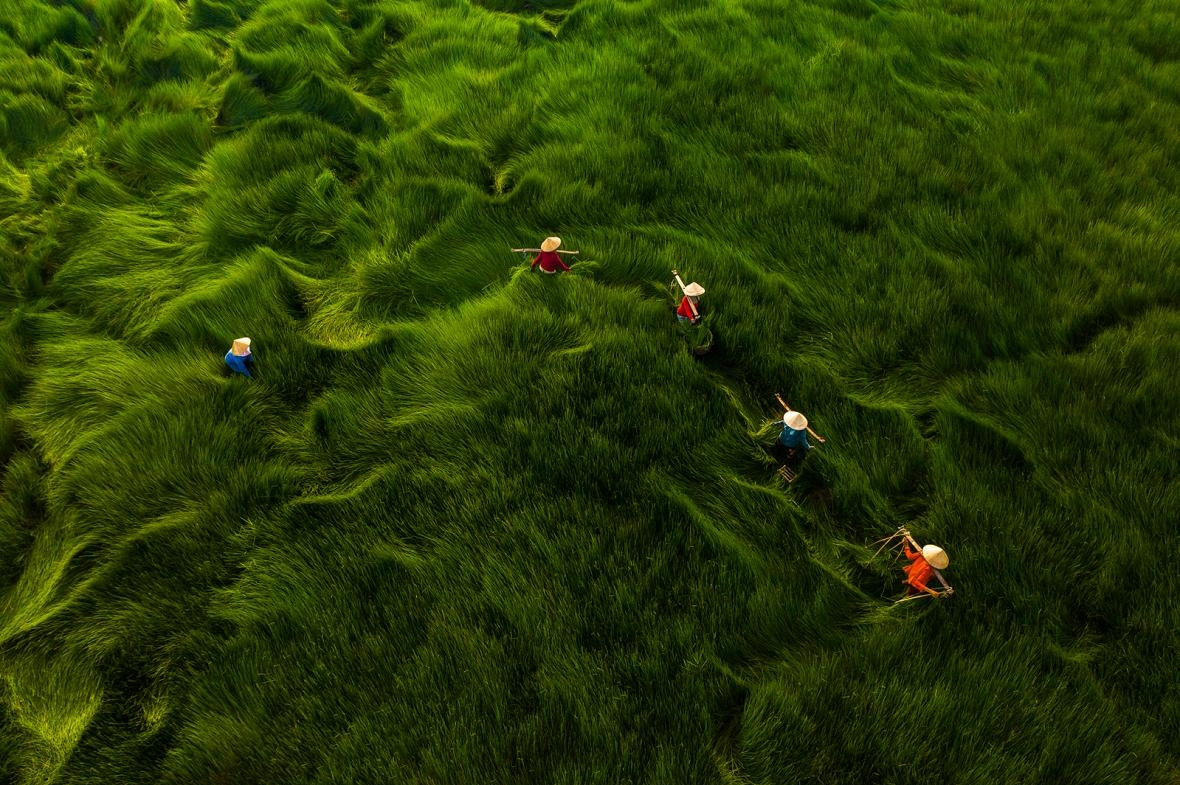 A shot capturing women harvesting water chestnuts in a field of Thang Binh District in central Quang Nam Province is one of drone shots in the Vietnam seen from above photo collection. Photo by Khanh Phan.