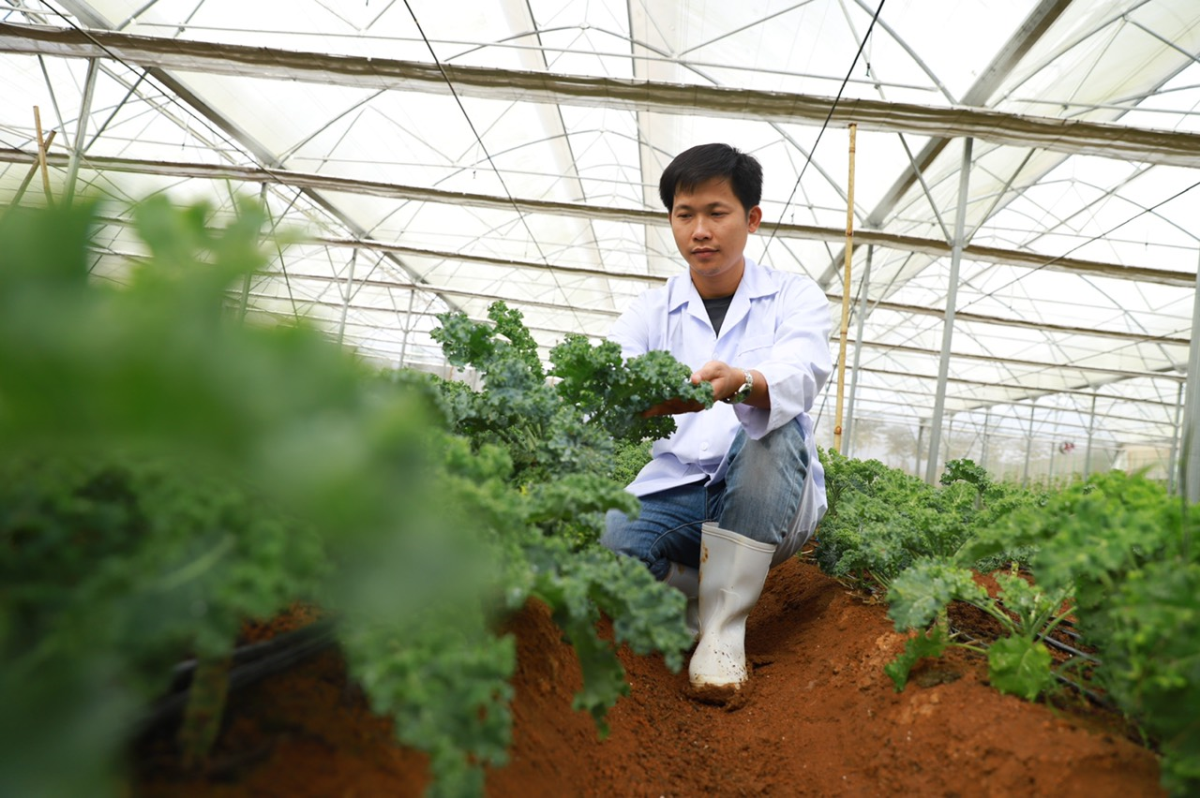 Herbal drink manufacturer turns threats into opportunities amid pandemic