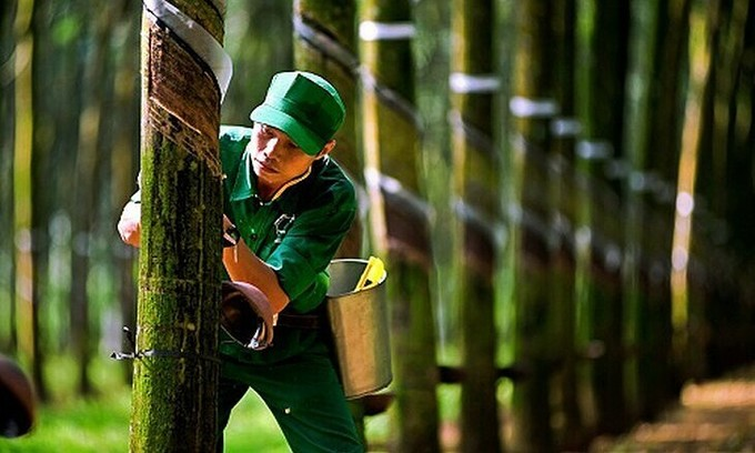 Rubber firms report surge in profits